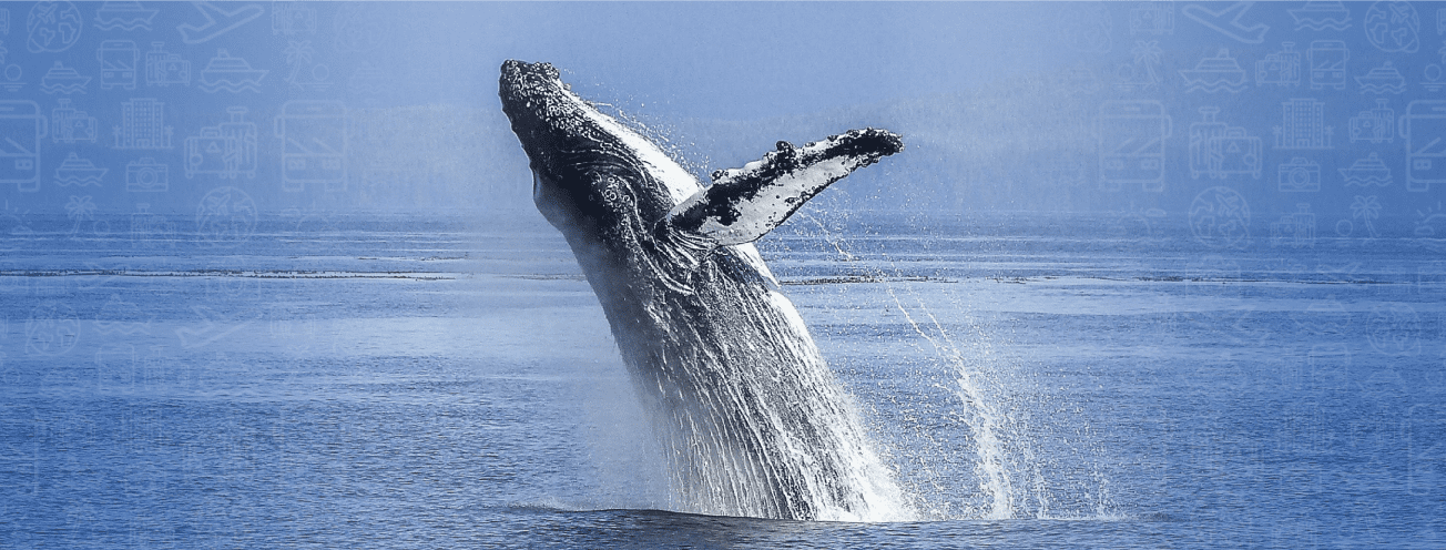 Espectáculo-ballenas